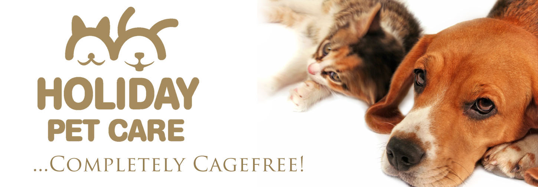 Dog Daycare Cage Free Boarding Toronto Dog Walking Thornhill
